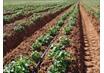 Санкции на западные товары, помогут российским аграриям производить бо ...